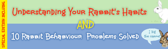 Special Offer: Understanding Your Rabbit's Habits & 10 Rabbit Behaviour PRoblems Solved
