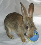 Rabbit Treat Ball 01