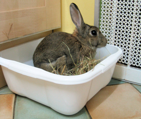 rabbit litter tray