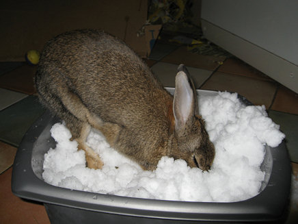 Snow Rabbit 3