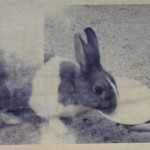 Roderick Rabbit 1960s