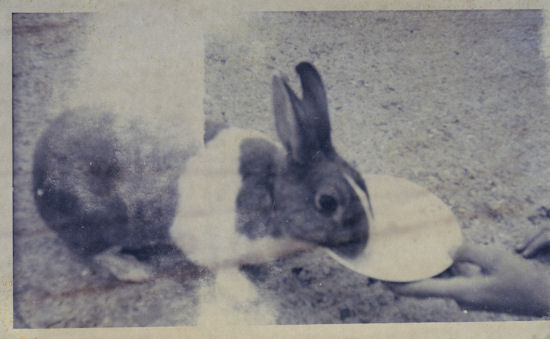 Roderick Rabbit 1960s