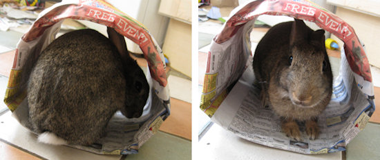 Making a Paper Tunnel Toy for Your Rabbit