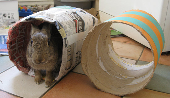 Toys For Bunnies : Making a paper tunnel toy for your rabbit