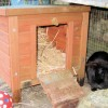 rabbit run shelter