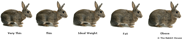 Diagram showing underweight and overweight rabbit