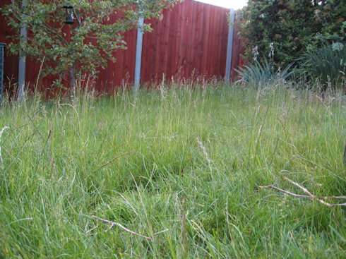 Making Your Own Hay – How to turn Grass into Hay