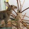 enrichment rabbit toy