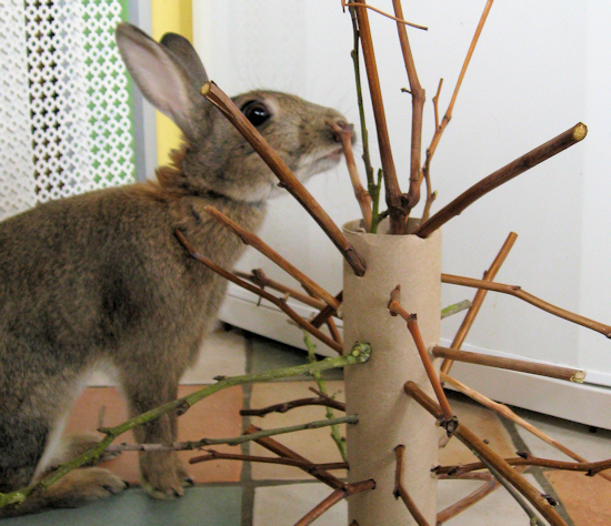 "Toys For Bunnies : Make a ""stick moster for your rabbit homemade toys"