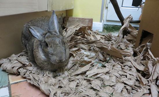 rabbit eats mat