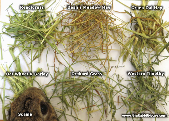 meadow hay, orchard grass, readi grass, timothy hay, oat hay