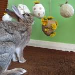 rabbit pinata