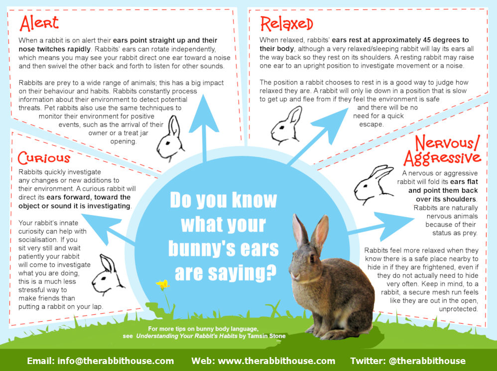 rabbit ear meaning