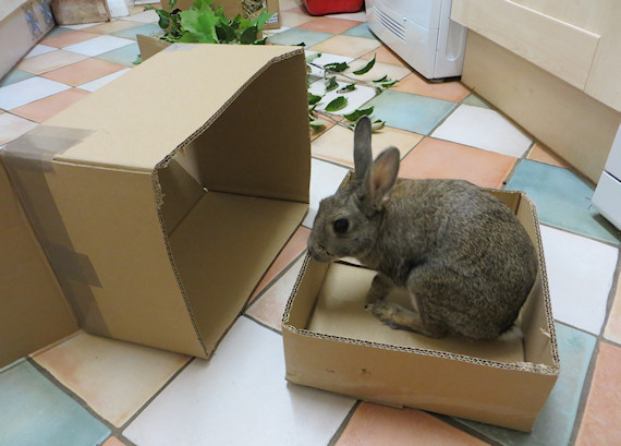 The rabbit house blog for Homemade bunny houses