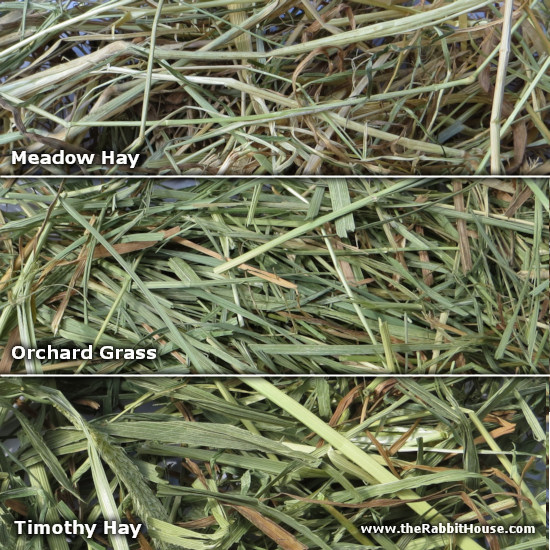 Meadow, Orchard and Timothy Hay