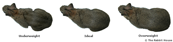 Underweight, Overweight and Ideal Rabbit