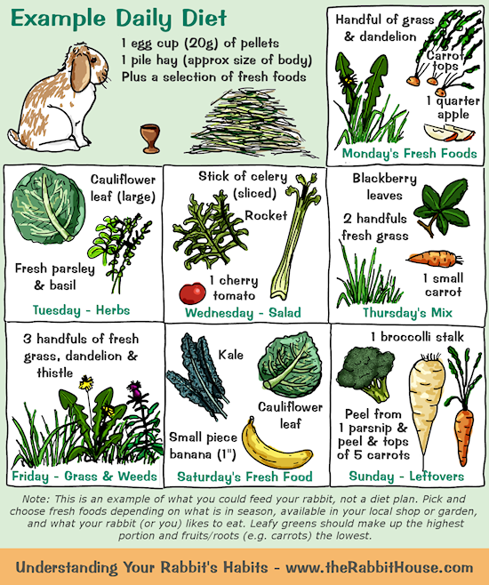 Your Rabbit S Diet Plants Vegetables Fruit