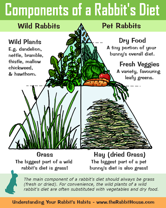 The Components of a Rabbits Diet - Hay/Grass, Commercial Dry Food