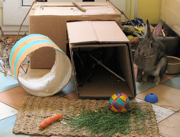 Diy Rabbit Shelter : Providing your rabbit with a shelter or hideaway