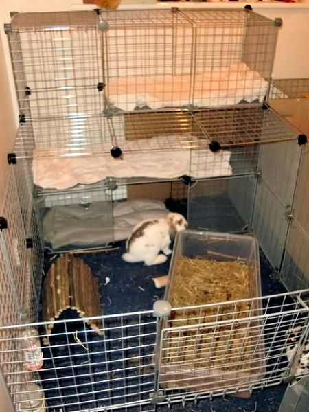 Rabbit Indoor Play Pen Gallery Inspiration For Your