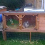 Wispa & Big Bunnies hutches