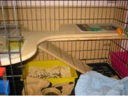 rabbit cage with shelf