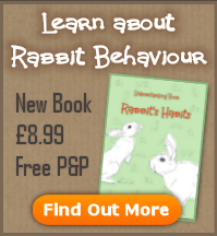 New Rabbit Behaviour Book