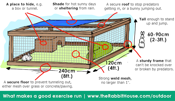 points to look for in a good rabbit run