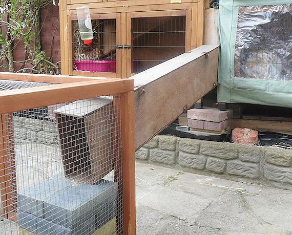 Connected A Rabbit Hutch A Run Ramps And Tunnels