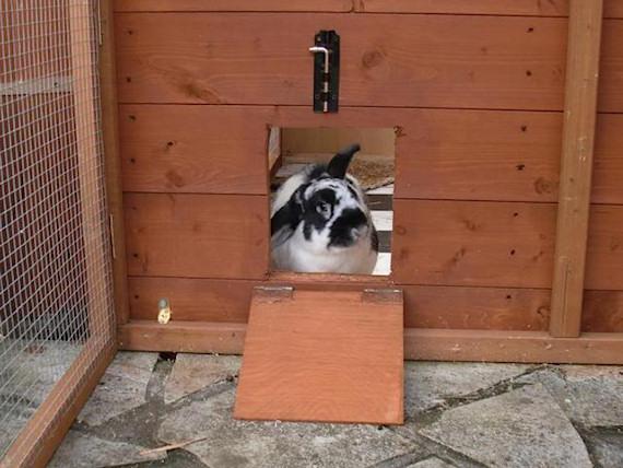 The Rabbit House Rabbit Sheds