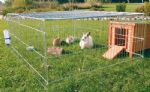 Rabbit Enclosure with Top